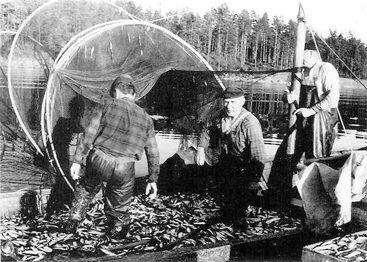 Stor-ryssjan vid Stor-Pellinge Baklandet